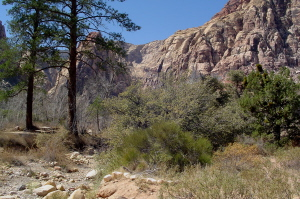 Red Rock Canyon 5 300.JPG